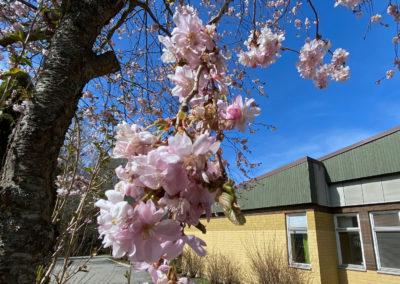 Våren på RG