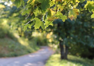 Hösten kommer